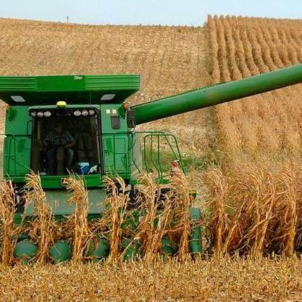 Уборка кукурузы на зерно и силос: агрегаты и способы